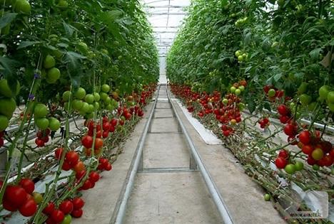 علاقه بخش خصوصی به سرمایهگذاری درکشت گلخانهای در ارس/حوزههای جذاب ارس برای سرمایهگذاران خارجی