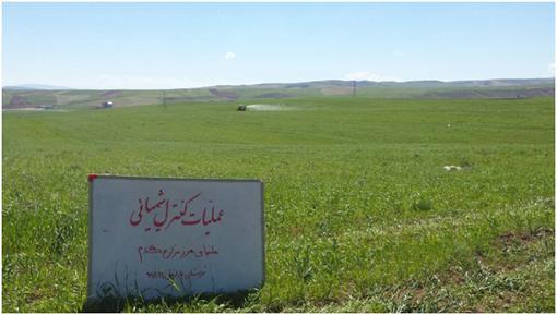 مبارزه شیمیایی با علف های هرز در سطح ۳۸۰۰ هکتار از مزارع گندم و جو شهرستان چاراویماق
