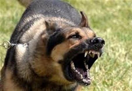 حمله سگهای نگهبان به اراذل واوباش متواری!
