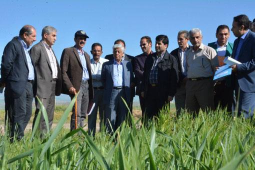 خروج و صادرات گندم و آرد ممنوع است  امسال برای چهارمین سال پیاپی در تولید گندم خودکفا هستیم