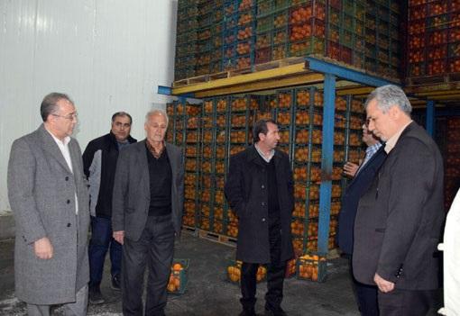 توزیع  ۲۶۵۰تن سیب و پرتقال به منظور تنظیم بازار میوه شب عید در سطح آذربایجان شرقی