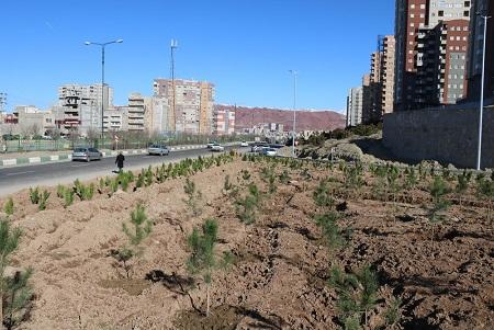 آغاز کاشت درخت در تقاطع غیرهمسطح حضرت ولیعصر (عج)