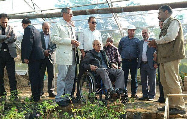 کاشت و تولید گیاهان دارویی در تفرجگاه عینالی قابل تقدیر است