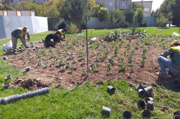 آغاز اجرای عملیات نهال کاری و گلکاری پاییزه در سطح معابر و پارک های شهرداری منطقه ۶تبریز
