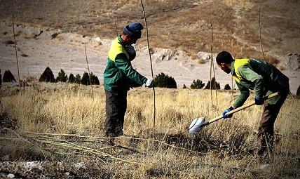 توسعه فضای سبز تفرجگاه «ائل باغی» با کاشت ۳ هزار اصله نهال