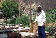 برداشت بیش از ۲ هزار تن عسل در شهرستان خداآفرین