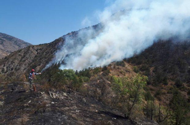 مهار آتش در جنگل های ارسباران اولویت اصلی ماست