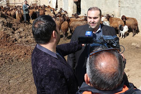 واکسیناسیون دام های سبک آذربایجان شرقی علیه بیماری تب برفکی