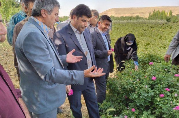 گزارش تصویری ریاست محترم سازمان جهاد کشاورزی استان از نهالستان قیزیل گول قاضی جهان در شهرستان آذرشهر