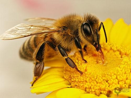 خواص درمانی زهر زنبور عسل بدون بررسی علمی