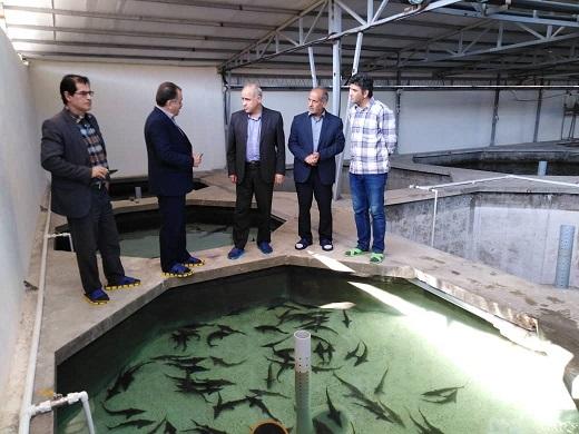 محدودیت منابع خاویار وحشی موجب شده تا صنعت پرورش ماهیان خاویاری بعنوان یک منبع جایگزین تولید خاویار مطرح شود